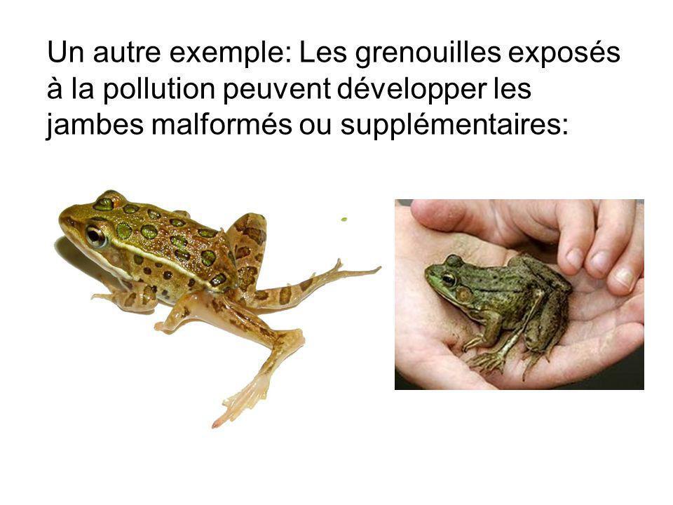 Un autre exemple: Les grenouilles exposés à la pollution peuvent développer les jambes malformés ou supplémentaires: