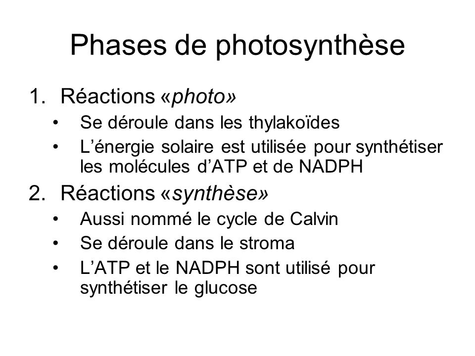 Phases de photosynthèse 1.Réactions «photo» Se déroule dans les thylakoïdes Lénergie solaire est utilisée pour synthétiser les molécules dATP et de NA