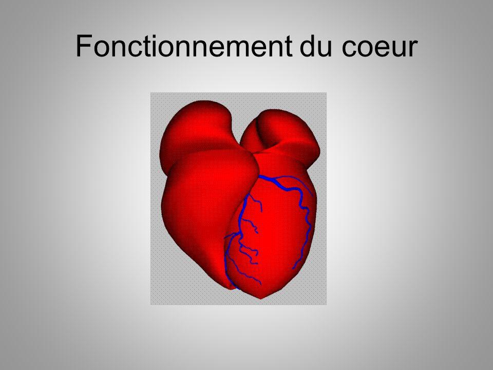 Le coeur Un muscle séparé en deux parties: – Une partie est aspirante et l autre refoulante – Une partie contient le sang oxygéné et lautre contient le sang désoxygéné – Les valves séparent les deux parties Le cœur est un double pompe