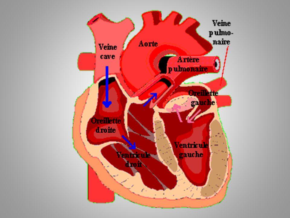 La révolution cardiaque Il y a trois étapes majeures: 1.La systole auriculaire 2.La systole ventriculaire 3.La diastole
