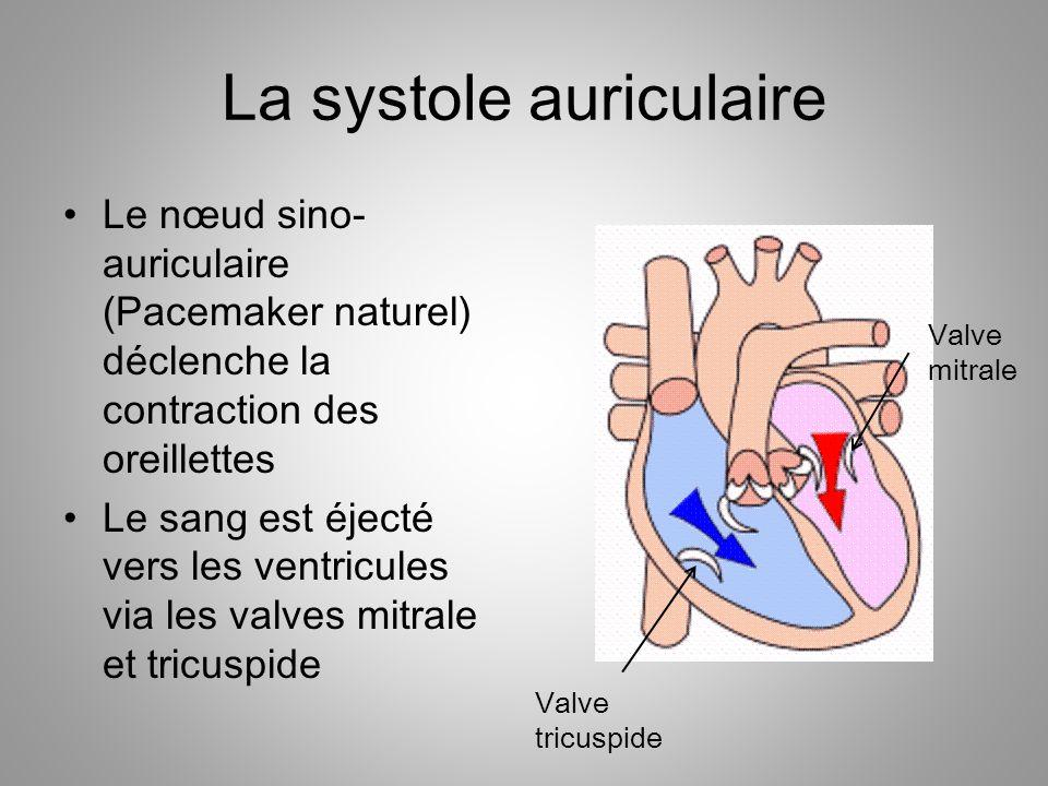 La systole auriculaire Le nœud sino- auriculaire (Pacemaker naturel) déclenche la contraction des oreillettes Le sang est éjecté vers les ventricules