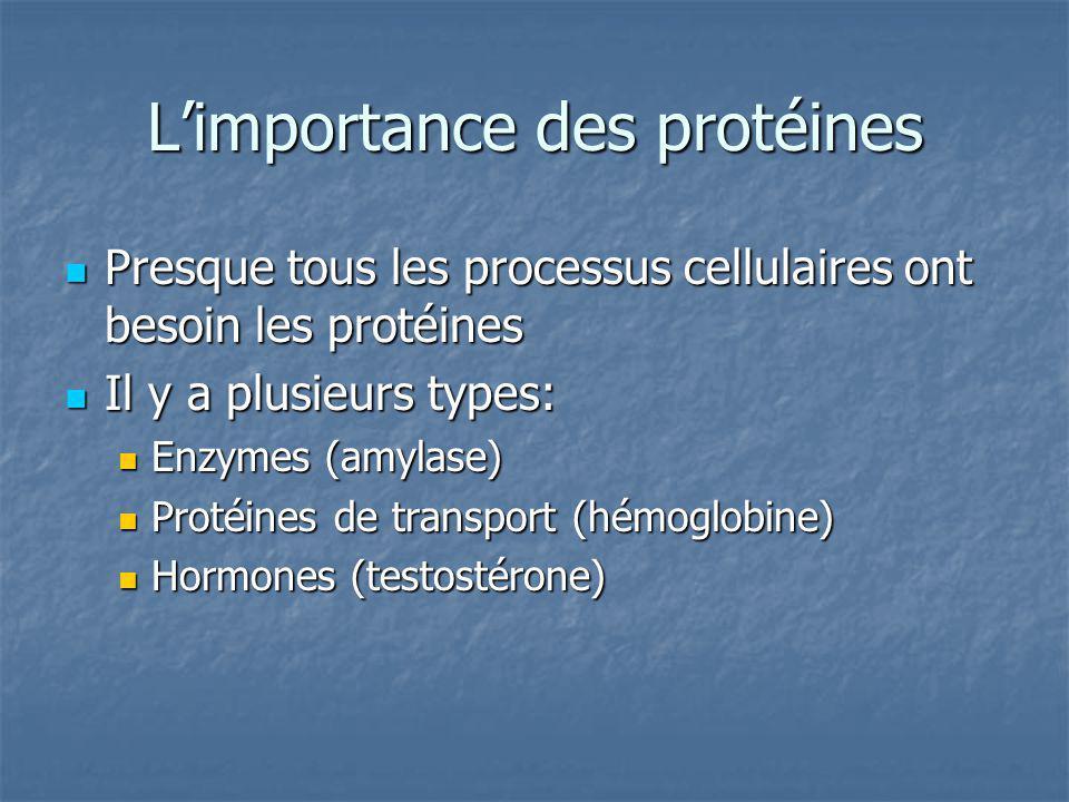 Le dogma centrale: La synthèse des protéines commence avec lADN La synthèse des protéines commence avec lADN LADN est transcrit à lARN LADN est transcrit à lARN LARN est traduit en protéines LARN est traduit en protéines