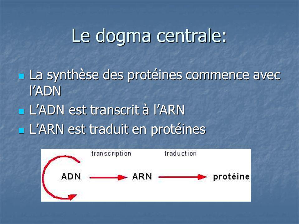 Rappelez-vous que lADN est une séquence de nucléotides.