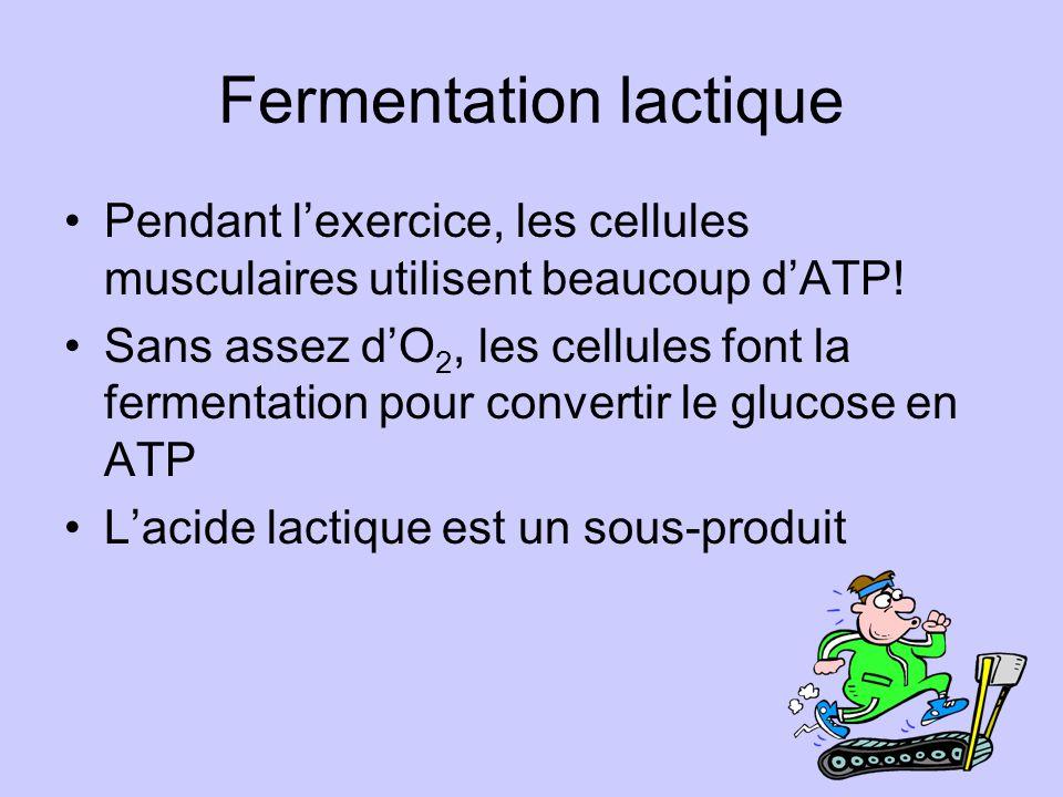 Fermentation lactique Pendant lexercice, les cellules musculaires utilisent beaucoup dATP! Sans assez dO 2, les cellules font la fermentation pour con