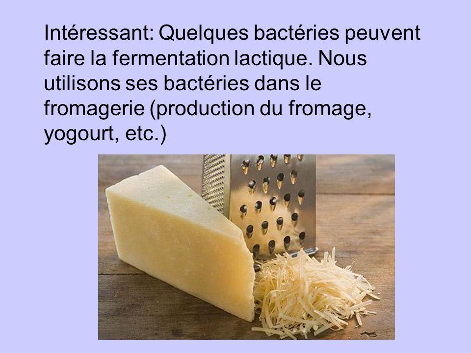 Intéressant: Quelques bactéries peuvent faire la fermentation lactique. Nous utilisons ses bactéries dans le fromagerie (production du fromage, yogour