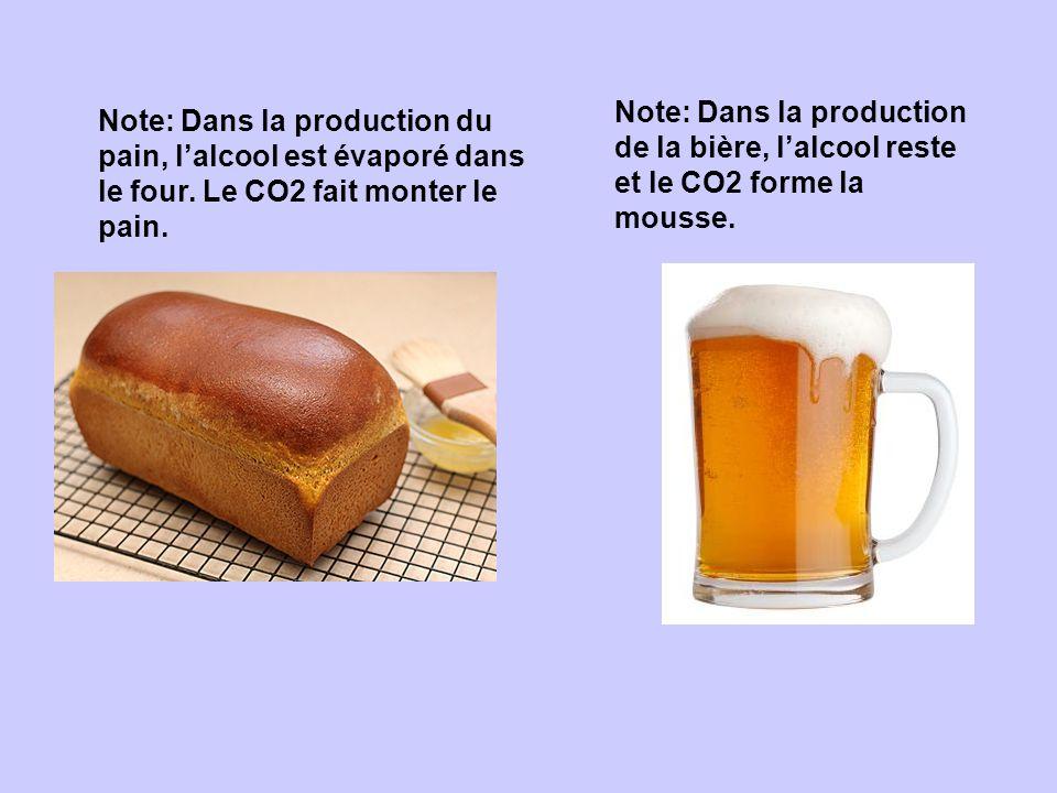 Note: Dans la production du pain, lalcool est évaporé dans le four. Le CO2 fait monter le pain. Note: Dans la production de la bière, lalcool reste et