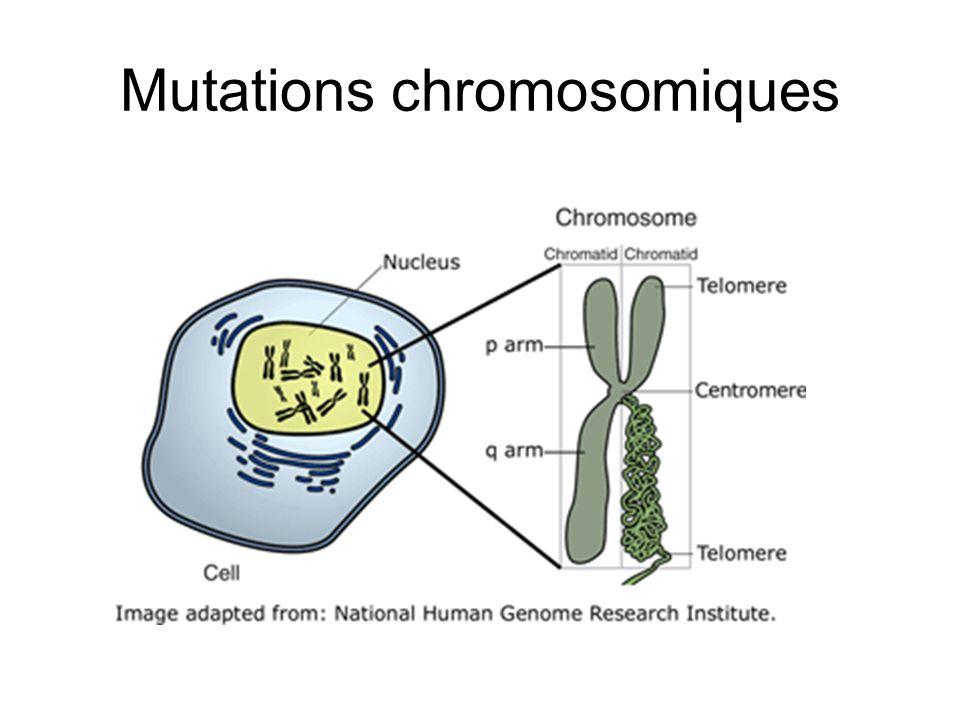 Mutations chromosomiques