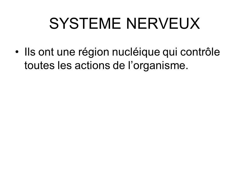 SYSTEME NERVEUX Ils ont une région nucléique qui contrôle toutes les actions de lorganisme.