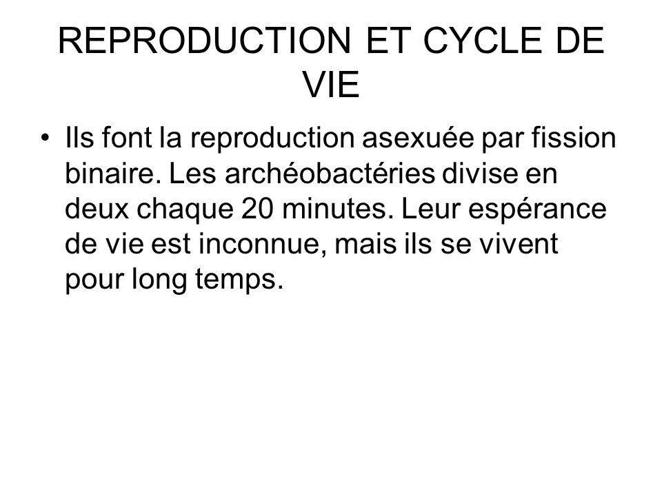 REPRODUCTION ET CYCLE DE VIE Ils font la reproduction asexuée par fission binaire.