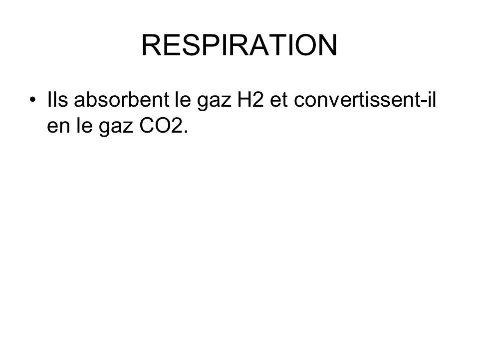RESPIRATION Ils absorbent le gaz H2 et convertissent-il en le gaz CO2.
