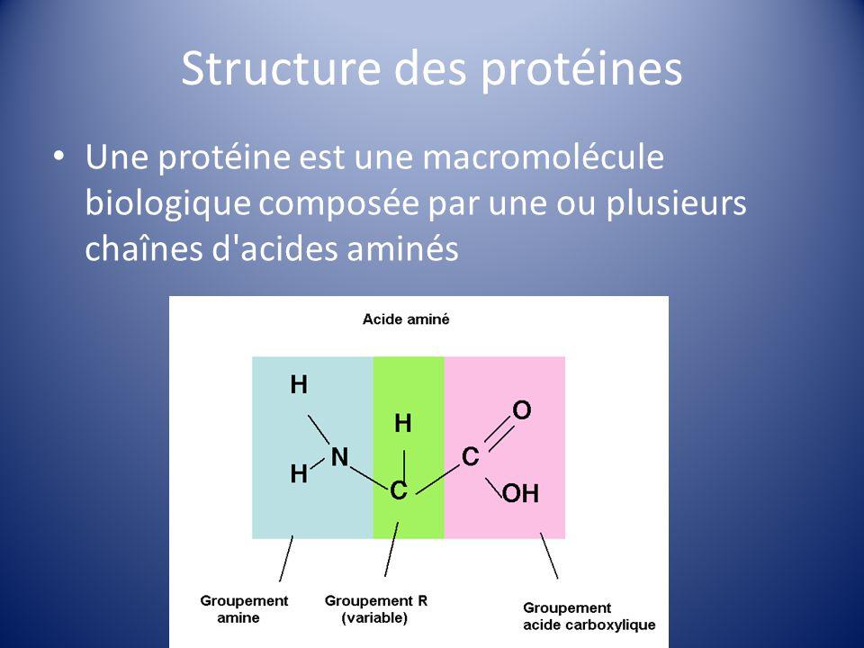 Structure des protéines Une protéine est une macromolécule biologique composée par une ou plusieurs chaînes d'acides aminés