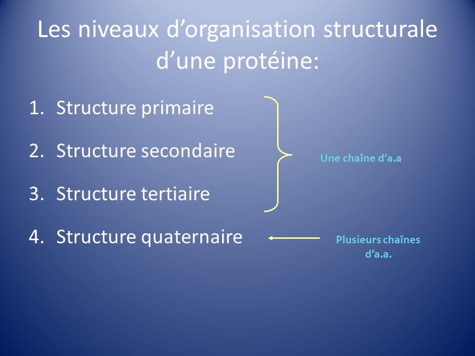 Les niveaux dorganisation structurale dune protéine: 1.Structure primaire 2.Structure secondaire 3.Structure tertiaire 4.Structure quaternaire Une cha