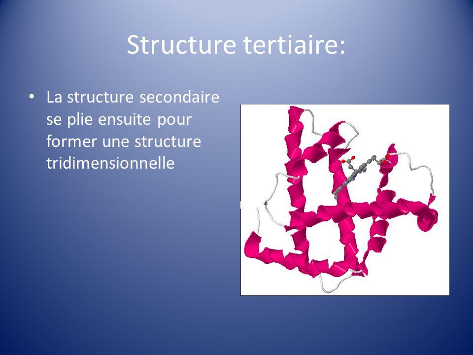 Structure tertiaire: La structure secondaire se plie ensuite pour former une structure tridimensionnelle