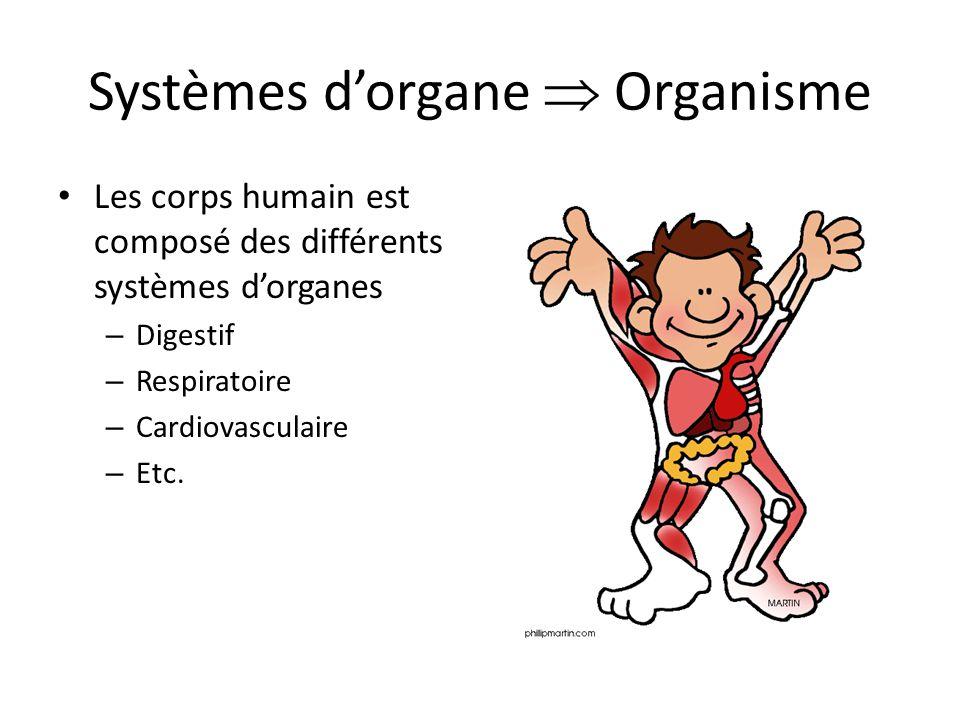 Systèmes dorgane Organisme Les corps humain est composé des différents systèmes dorganes – Digestif – Respiratoire – Cardiovasculaire – Etc.