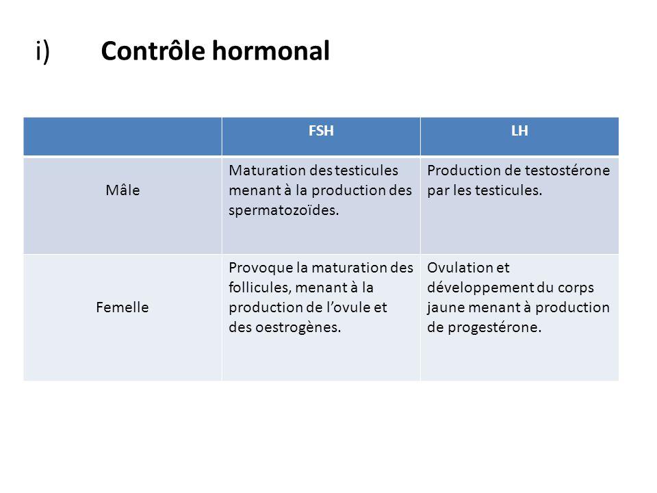 FSHLH Mâle Maturation des testicules menant à la production des spermatozoïdes. Production de testostérone par les testicules. Femelle Provoque la mat