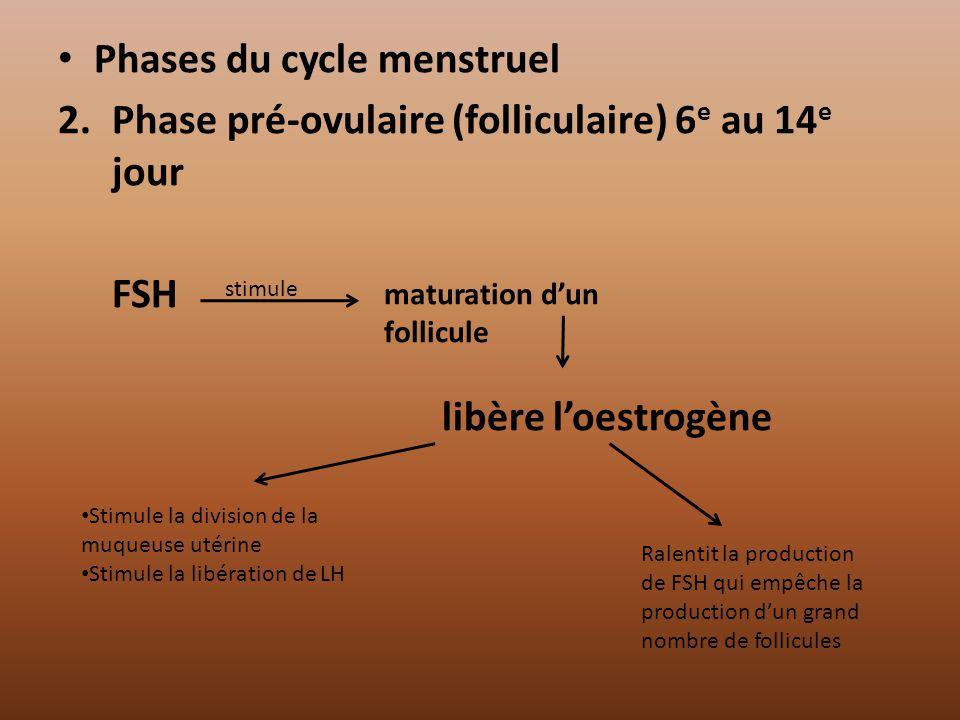 Phases du cycle menstruel 2.Phase pré-ovulaire (folliculaire) 6 e au 14 e jour FSH libère loestrogène Stimule la division de la muqueuse utérine Stimu