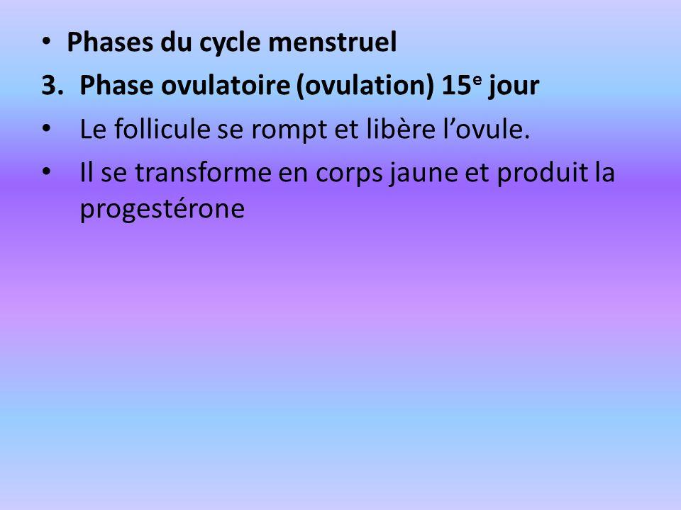 Phases du cycle menstruel 3.Phase ovulatoire (ovulation) 15 e jour Le follicule se rompt et libère lovule. Il se transforme en corps jaune et produit