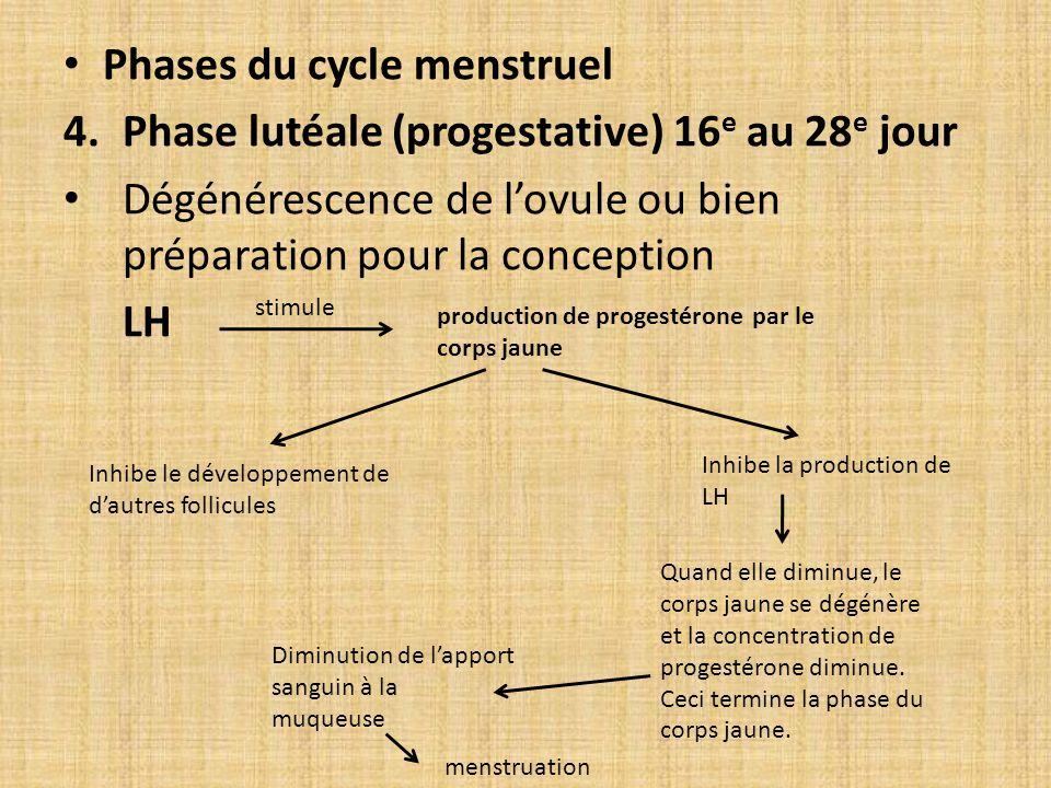 Phases du cycle menstruel 4.Phase lutéale (progestative) 16 e au 28 e jour Dégénérescence de lovule ou bien préparation pour la conception LH stimule
