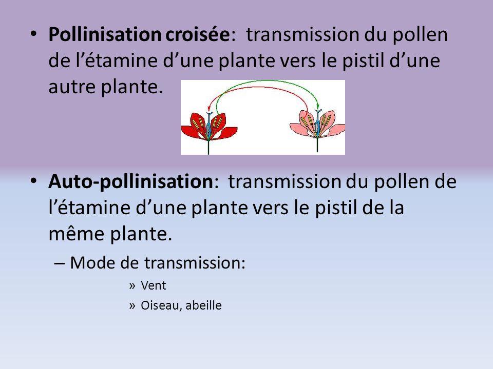 Pollinisation croisée: transmission du pollen de létamine dune plante vers le pistil dune autre plante. Auto-pollinisation: transmission du pollen de