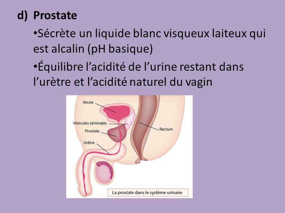 d)Prostate Sécrète un liquide blanc visqueux laiteux qui est alcalin (pH basique) Équilibre lacidité de lurine restant dans lurètre et lacidité nature