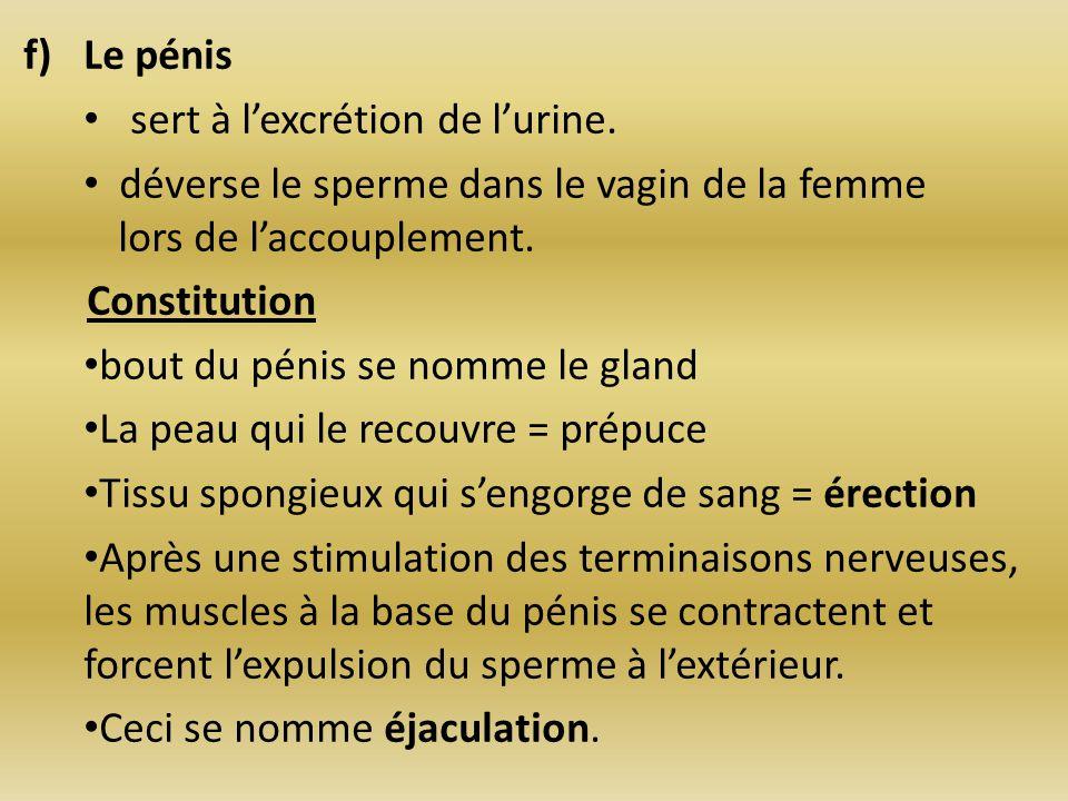 f)Le pénis sert à lexcrétion de lurine. déverse le sperme dans le vagin de la femme lors de laccouplement. Constitution bout du pénis se nomme le glan
