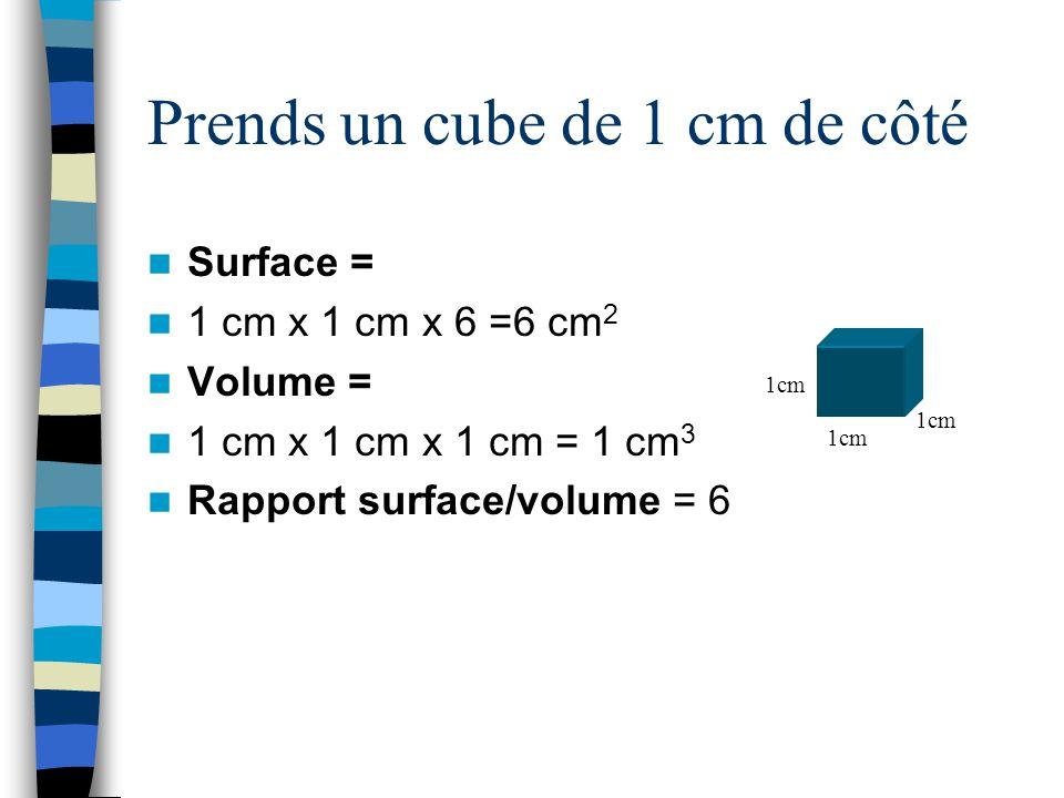 Prends un cube de 2 cm de côté Surface = 2 cm x 2 cm x 6 =24 cm 2 Volume = 2 cm x 2 cm x 2 cm = 8 cm 3 Rapport surface/volume = 3 2cm