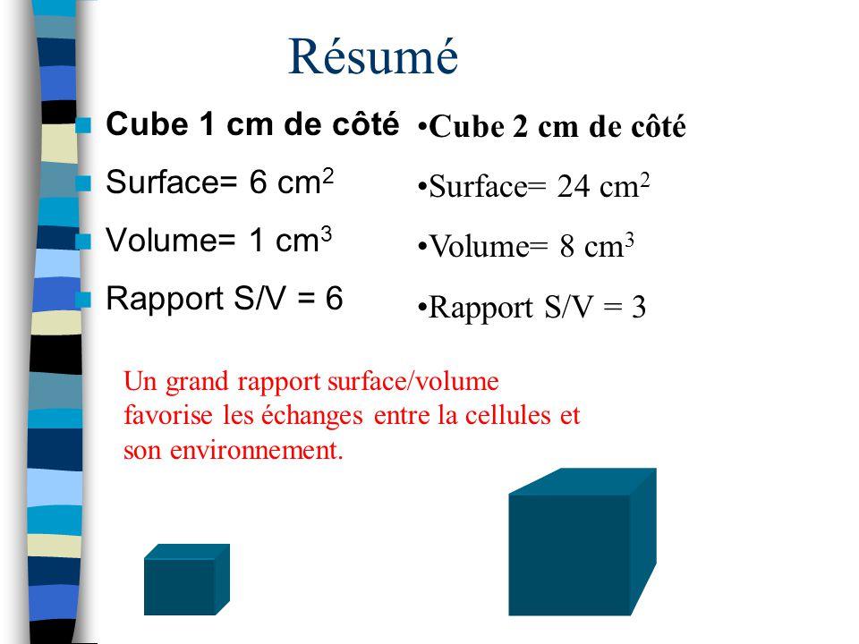 Résumé Cube 1 cm de côté Surface= 6 cm 2 Volume= 1 cm 3 Rapport S/V = 6 Cube 2 cm de côté Surface= 24 cm 2 Volume= 8 cm 3 Rapport S/V = 3 Un grand rap