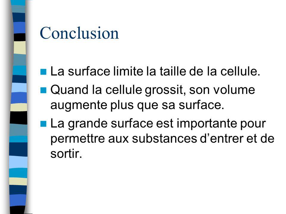 Conclusion La surface limite la taille de la cellule. Quand la cellule grossit, son volume augmente plus que sa surface. La grande surface est importa
