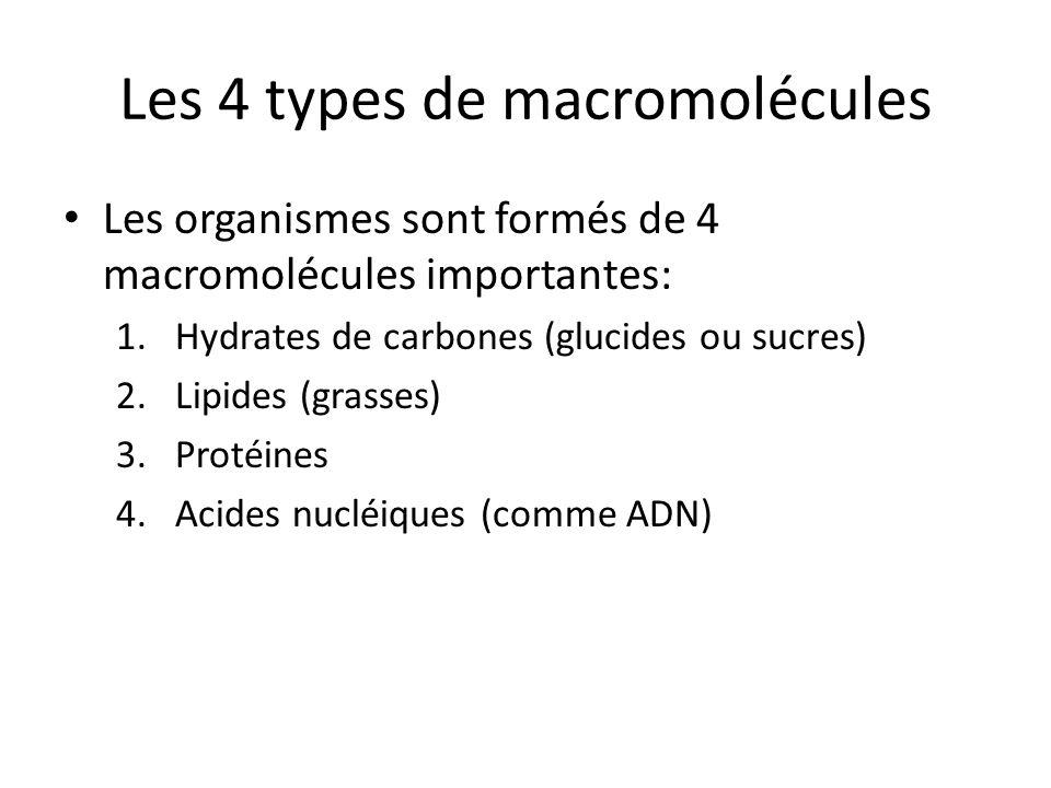 Les 4 types de macromolécules Les organismes sont formés de 4 macromolécules importantes: 1.Hydrates de carbones (glucides ou sucres) 2.Lipides (grass