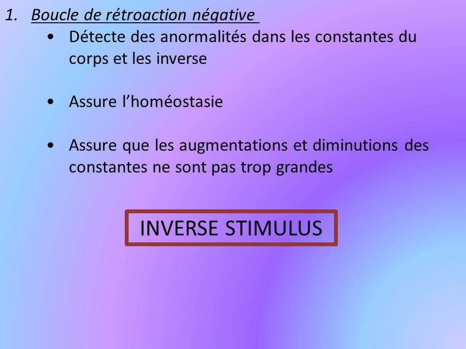 1.Boucle de rétroaction négative Détecte des anormalités dans les constantes du corps et les inverse Assure lhoméostasie Assure que les augmentations et diminutions des constantes ne sont pas trop grandes INVERSE STIMULUS