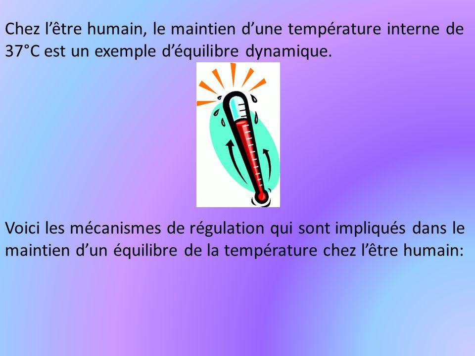 Chez lêtre humain, le maintien dune température interne de 37°C est un exemple déquilibre dynamique. Voici les mécanismes de régulation qui sont impli