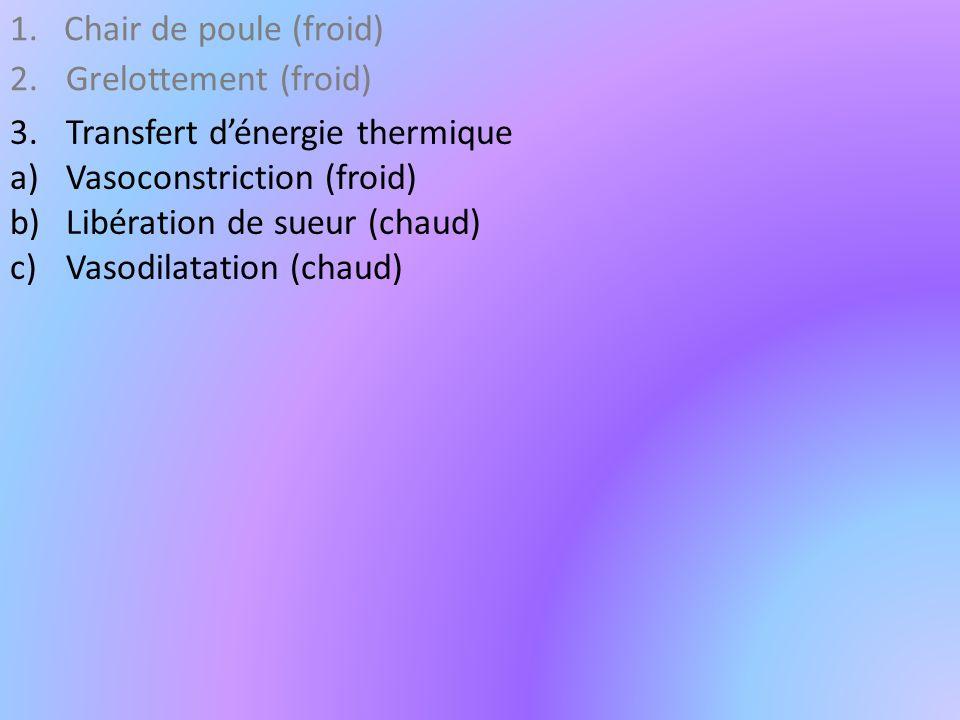 1.Chair de poule (froid) 2.Grelottement (froid) 3.Transfert dénergie thermique a)Vasoconstriction (froid) b)Libération de sueur (chaud) c)Vasodilatation (chaud)