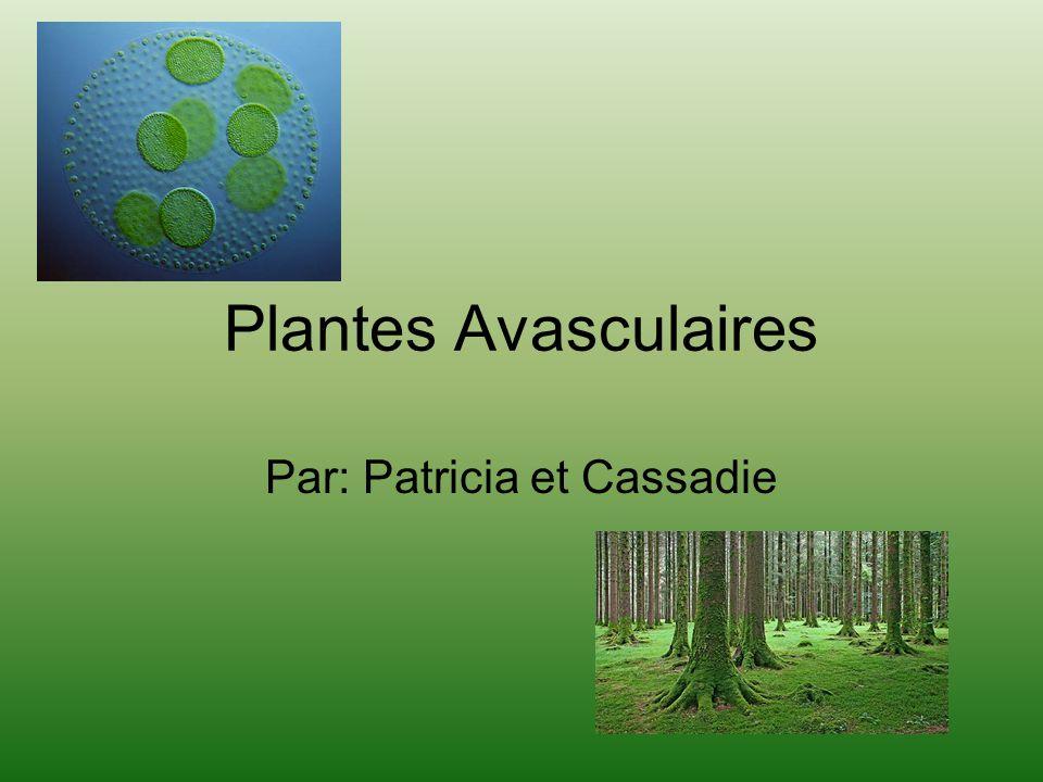 Plantes Avasculaires Par: Patricia et Cassadie