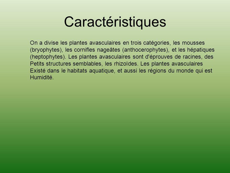 Caractéristiques On a divise les plantes avasculaires en trois catégories, les mousses (bryophytes), les cornifles nageâtes (anthocerophytes), et les