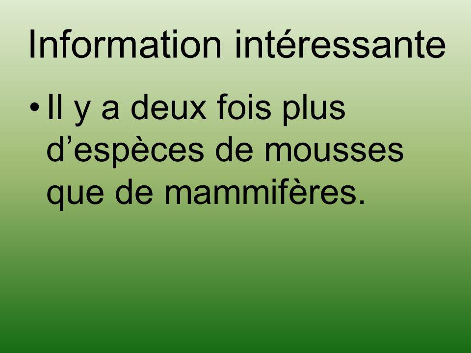 Information intéressante Il y a deux fois plus despèces de mousses que de mammifères.