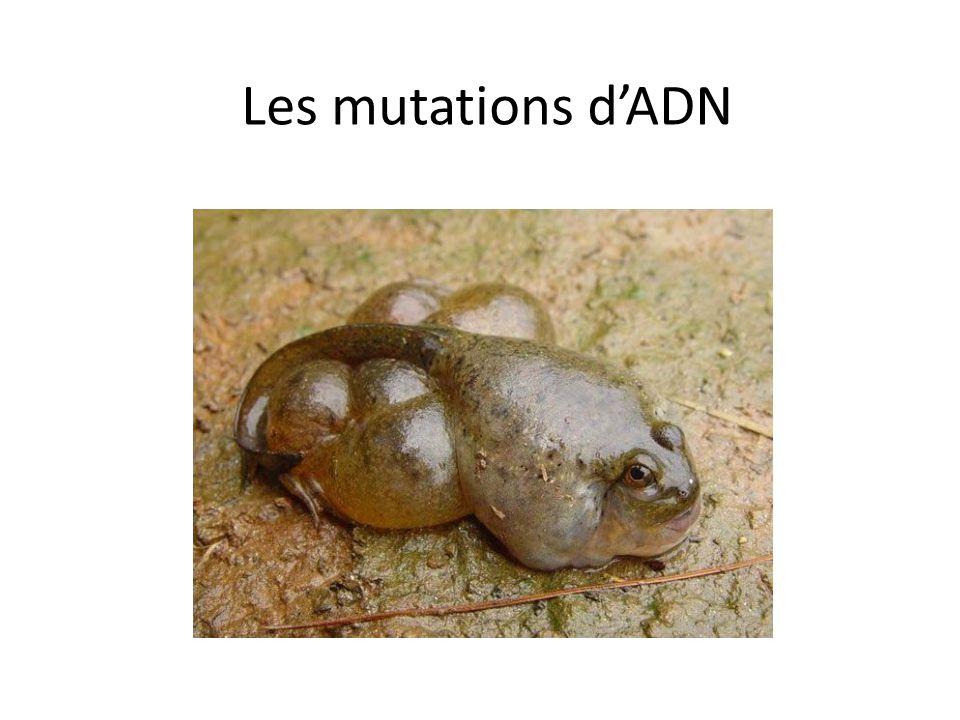Les mutations dADN