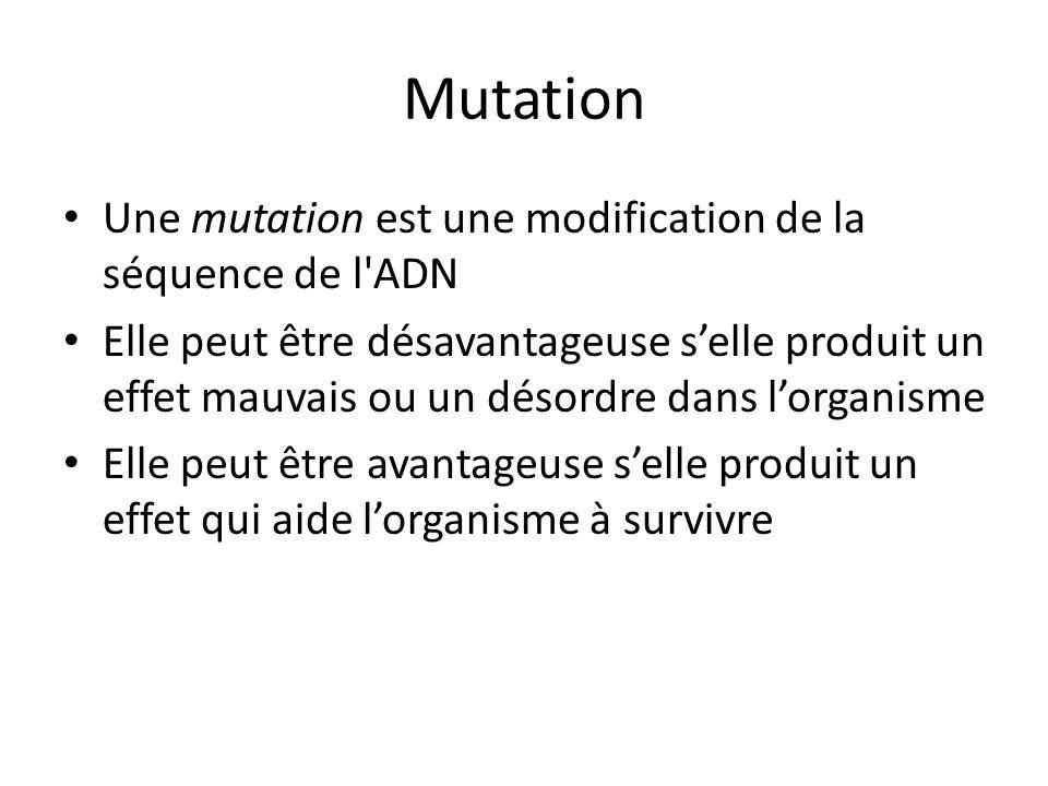 Mutation Une mutation est une modification de la séquence de l ADN Elle peut être désavantageuse selle produit un effet mauvais ou un désordre dans lorganisme Elle peut être avantageuse selle produit un effet qui aide lorganisme à survivre