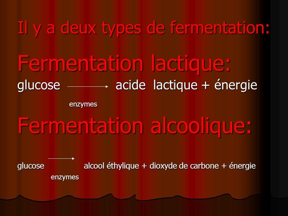 Il y a deux types de fermentation: Fermentation lactique: glucose acide lactique + énergie enzymes enzymes Fermentation alcoolique: glucose alcool éthylique + dioxyde de carbone + énergie enzymes enzymes