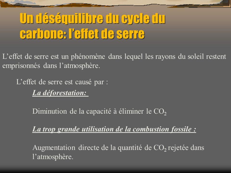 Un déséquilibre du cycle du carbone: leffet de serre Leffet de serre est un phénomène dans lequel les rayons du soleil restent emprisonnés dans latmos