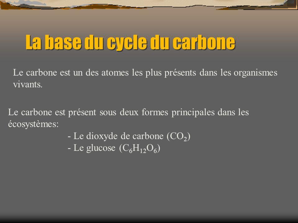 La base du cycle du carbone Le carbone est présent sous deux formes principales dans les écosystèmes: - Le dioxyde de carbone (CO 2 ) - Le glucose (C