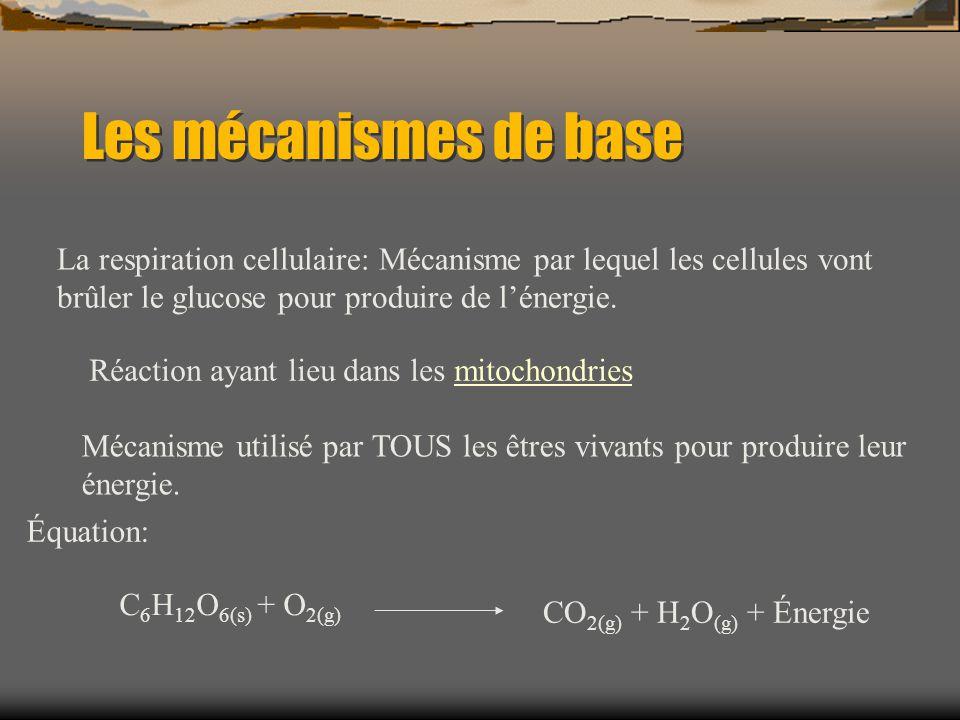 Les mécanismes de base La respiration cellulaire: Mécanisme par lequel les cellules vont brûler le glucose pour produire de lénergie. Réaction ayant l