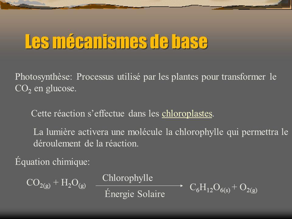Les mécanismes de base Photosynthèse: Processus utilisé par les plantes pour transformer le CO 2 en glucose. Cette réaction seffectue dans les chlorop
