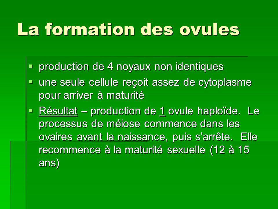 La formation des ovules production de 4 noyaux non identiques production de 4 noyaux non identiques une seule cellule reçoit assez de cytoplasme pour