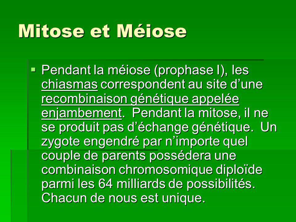 Mitose et Méiose Pendant la méiose (prophase I), les chiasmas correspondent au site dune recombinaison génétique appelée enjambement. Pendant la mitos