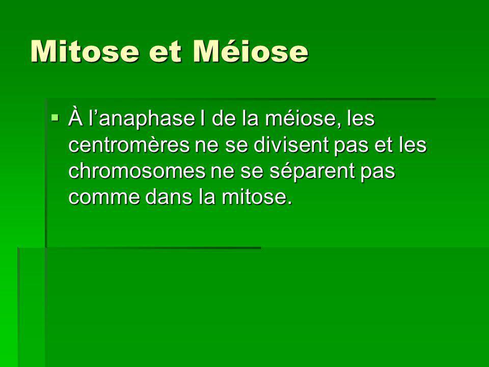 Mitose et Méiose À lanaphase I de la méiose, les centromères ne se divisent pas et les chromosomes ne se séparent pas comme dans la mitose. À lanaphas