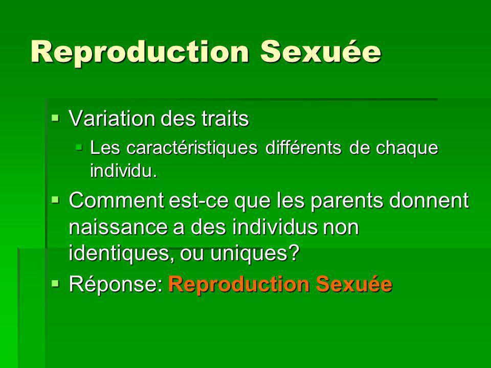 Variation des traits Variation des traits Les caractéristiques différents de chaque individu. Les caractéristiques différents de chaque individu. Comm