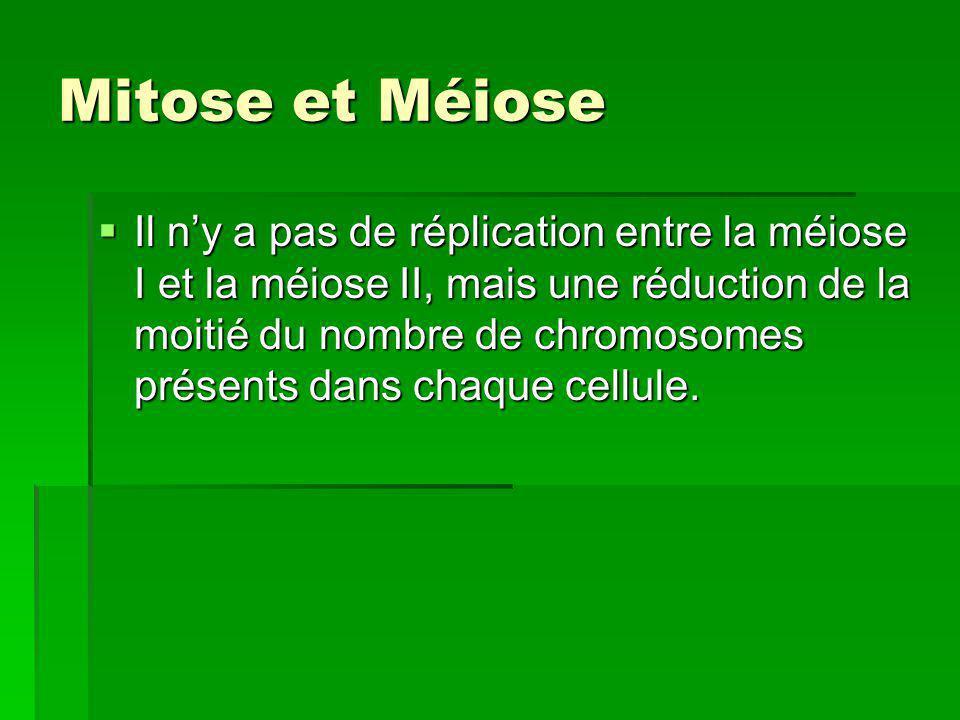 Mitose et Méiose Il ny a pas de réplication entre la méiose I et la méiose II, mais une réduction de la moitié du nombre de chromosomes présents dans