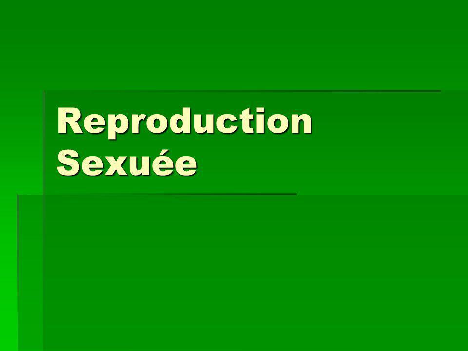 Reproduction Sexuée