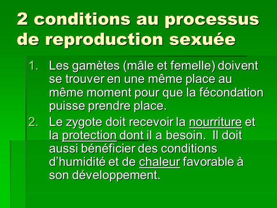 2 conditions au processus de reproduction sexuée 2 conditions au processus de reproduction sexuée 1.Les gamètes (mâle et femelle) doivent se trouver e