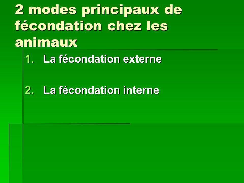 2 modes principaux de fécondation chez les animaux 1.La fécondation externe 2.La fécondation interne